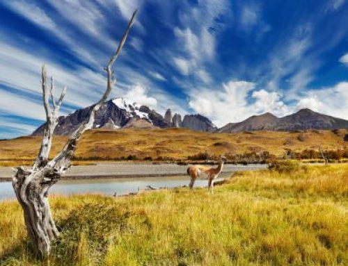 Cile: Patagonia e Isola di Pasqua – Partenza 26 dicembre * Completo!
